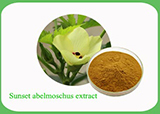 Sunset Abelmoschus Extract